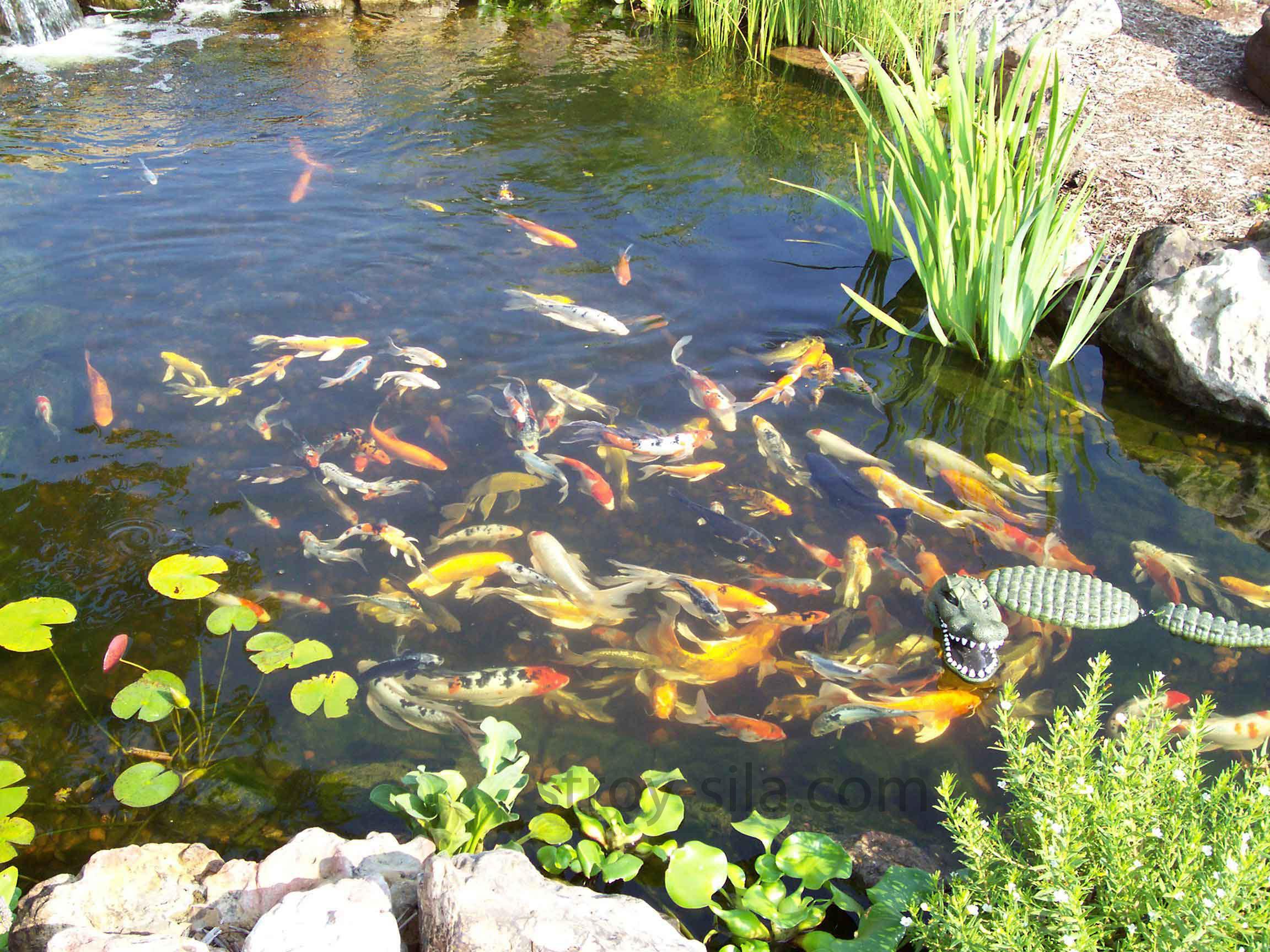 Водоем для рыбы на даче своими руками